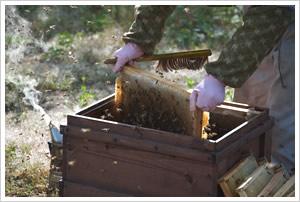 竹中養蜂園